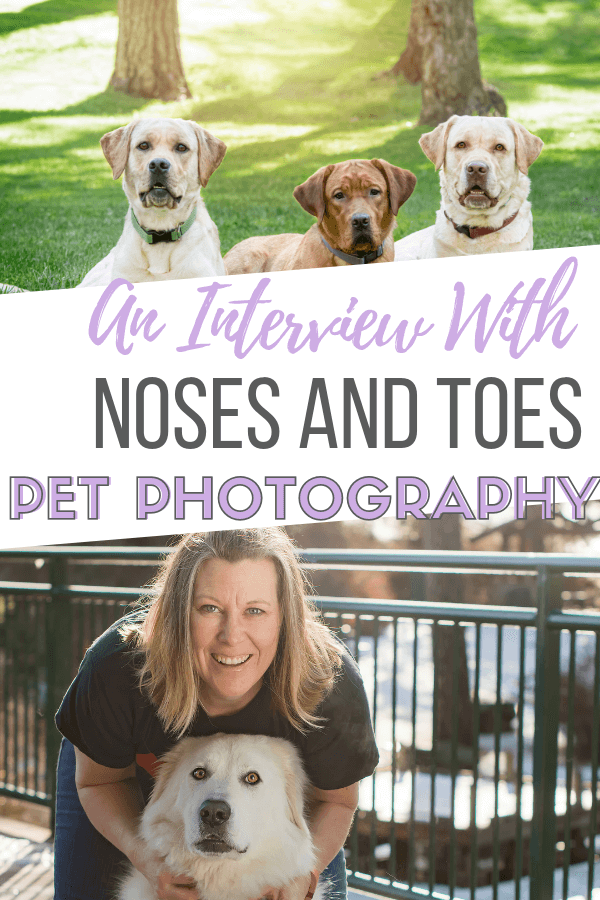 an interview with angela of noses and toes pet photography