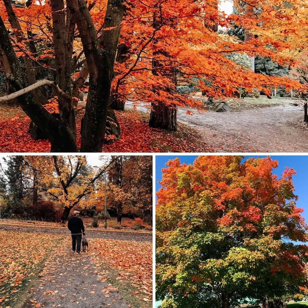 fall in spokane - manito park photos