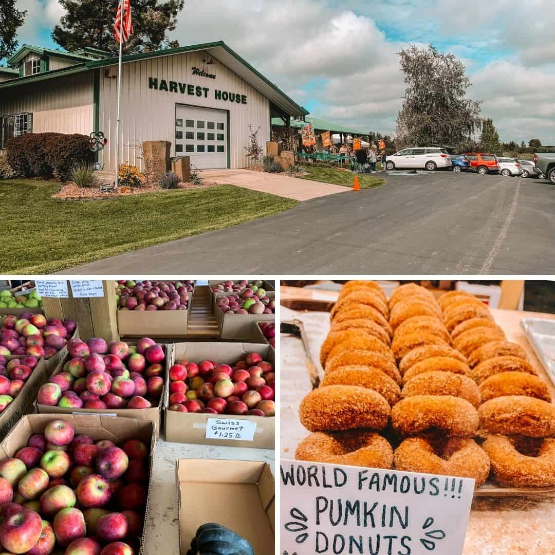 photos of green bluff in the fall, including donuts and apples
