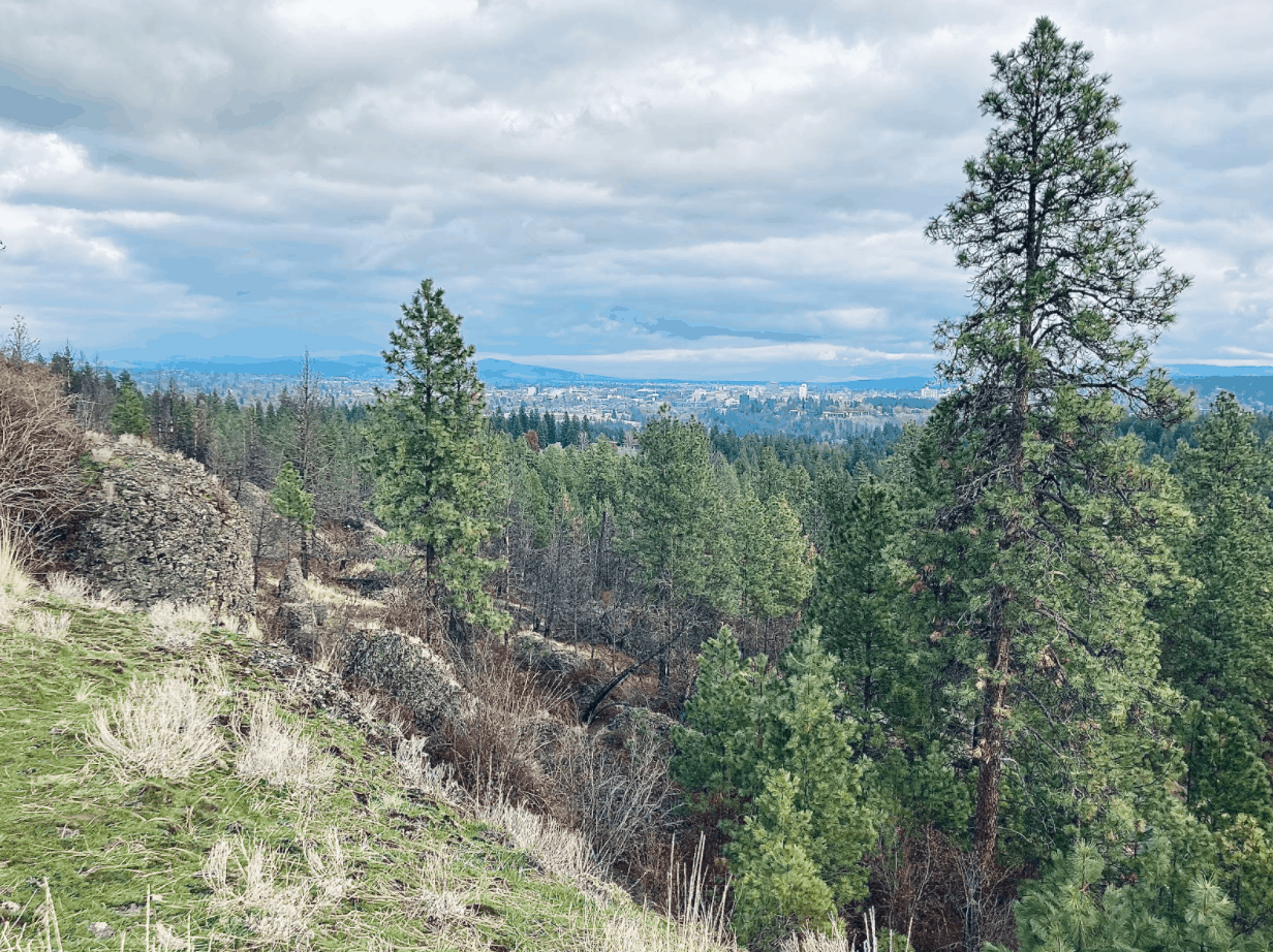 view of Rimrock Conservation Loop Trail-Palisades Park